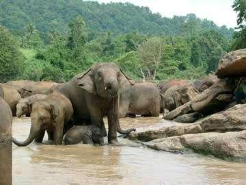 Шри-Ланка - Купание слонов